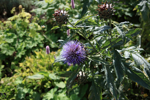 decorative purple thistles
