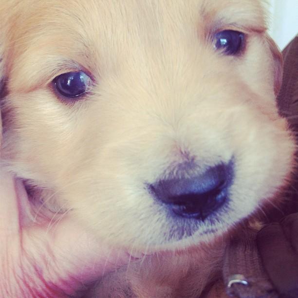 puppy-2